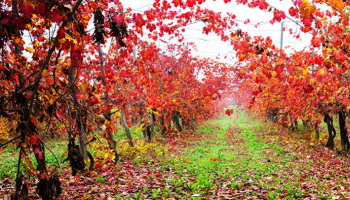 The magic of autumn: the vines red dress